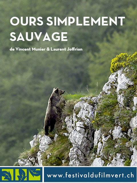 OURS SIMPLEMENT SAUVAGE